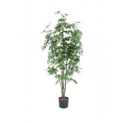 Šeflera listnatý strom, 150 cm