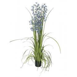 Orchidej modro-fialová v trávě, 140cm