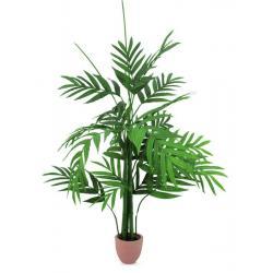 Areca palma s velkými listy, 230cm
