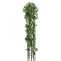 Klasický břečťan, 160 cm