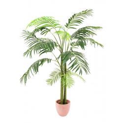 Areca palma 3 kmeny, 210cm