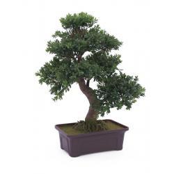 Bonsai v truhlíku