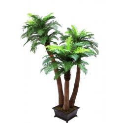Kapradinová palma 3 kmeny 240 cm