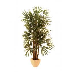 Lady palma, 150 cm