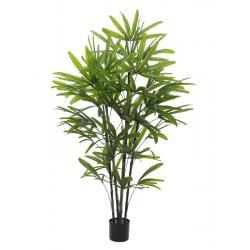 Rhapis Palm Tree 175 cm