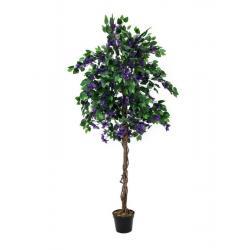 Bougainvillea fialová 150cm