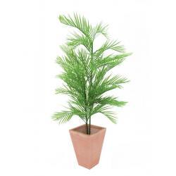 Kentia palma, 150 cm