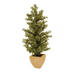 Lesní fíkus, stříbrolistý, 120 cm