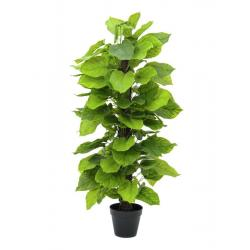 Pothos Plant 125 cm