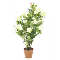 Růžový keř, krémová, 86 cm